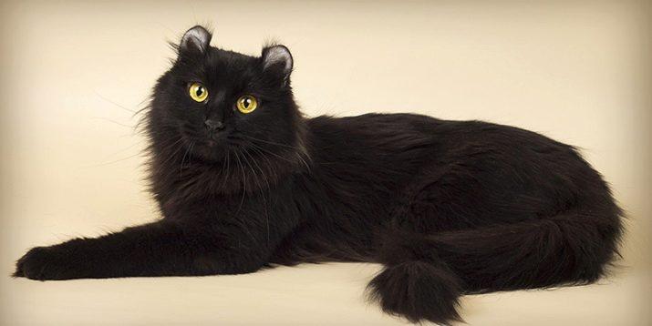 Порода черная кошка с желтыми глазами порода фото thumbnail