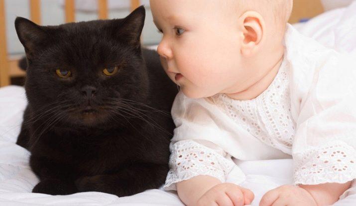 Породы черных кошек с фотографиями названиями