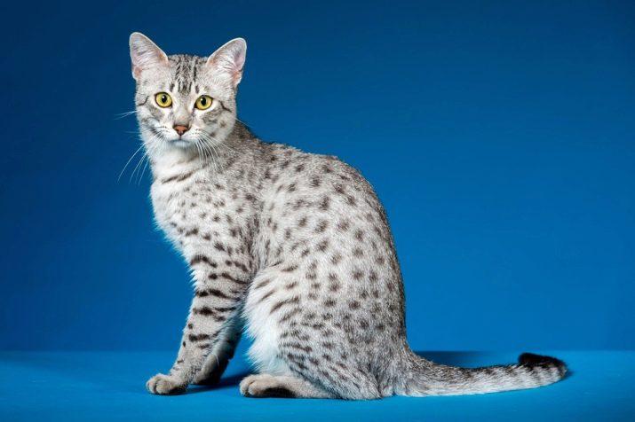 Кошки самого редкой породы thumbnail