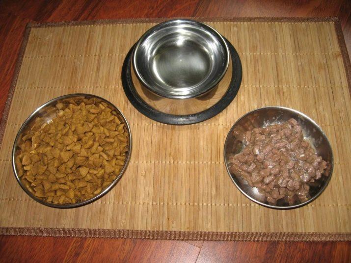 Сколько сухого корма в день необходимо кошке