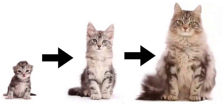 свадьбе может развитие котят по месяцам фото может быть, что