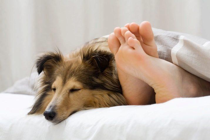 Рычание собаки: что делать, если она начала рычать на хозяина, когда ее гладят?
