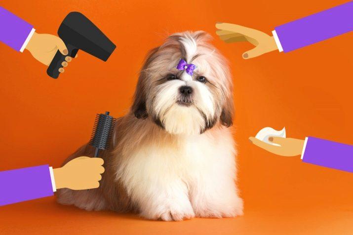 Ши-тцу: все о собаке, фото, описание породы, характер, цена 15