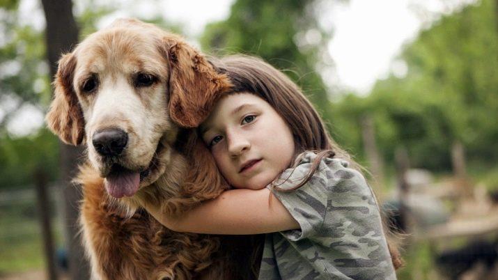 Собака для ребенка: лучшие породы для детей, рекомендации 3
