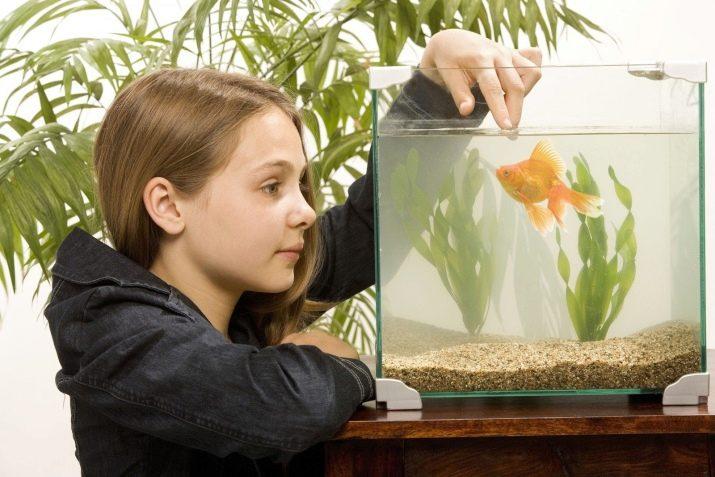 картинка кормить рыбок в аквариуме токио уже полтора